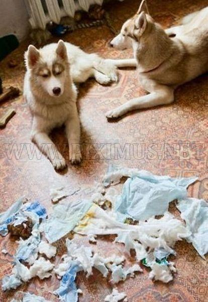 Troubles with Husky