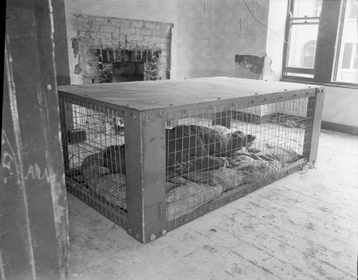 Morrison Shelter