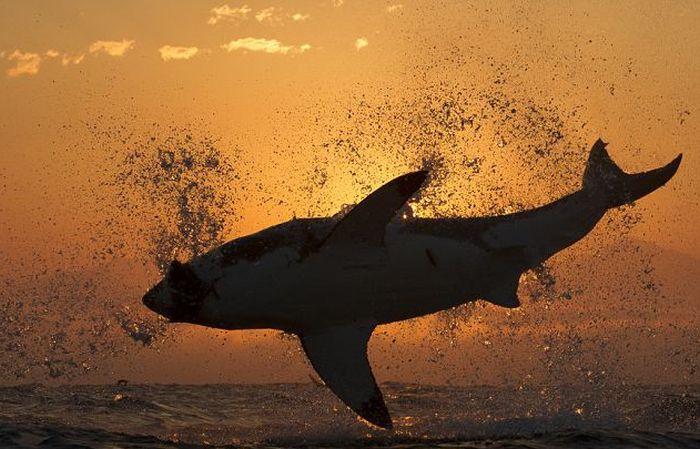 shark suit #10