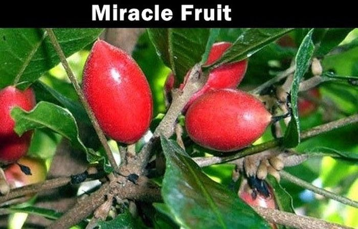 Foreign Fruits