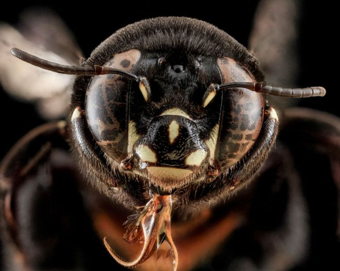 Macro Photos of Insects