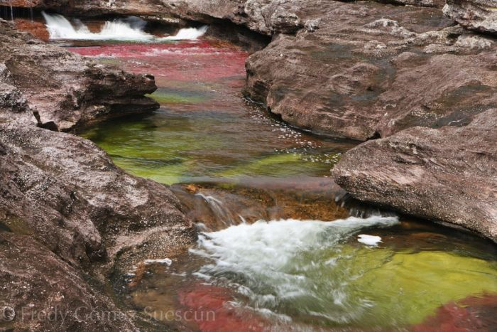Cano Cristales aka The River of Five Colors