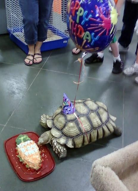 Animal Birthdays