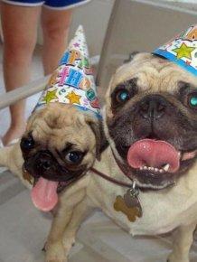 Animal Birthdays
