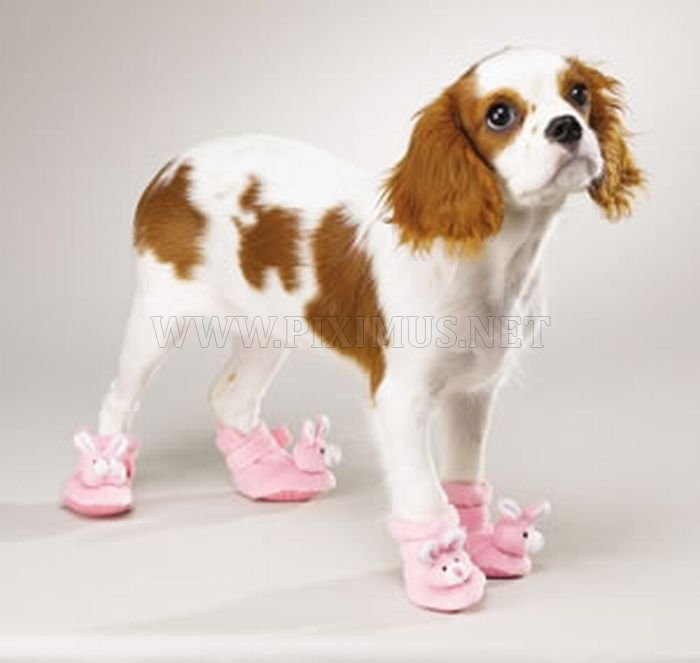 Dogs in Slippers
