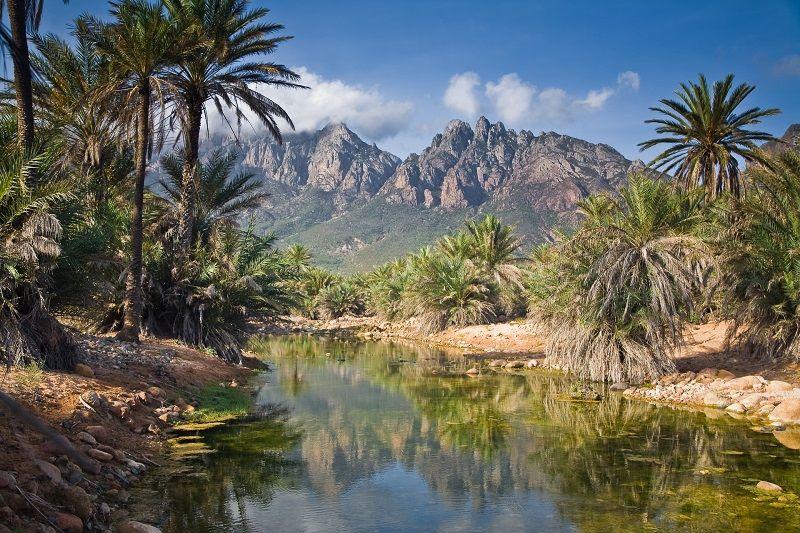 The Amazing Island Of Socotra Others