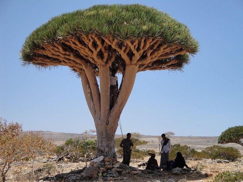 The amazing island of Socotra
