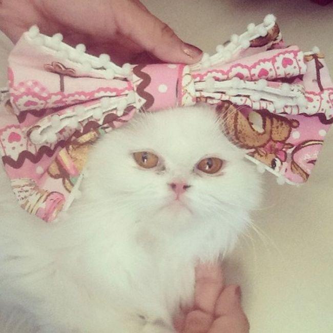 Dressed Animals
