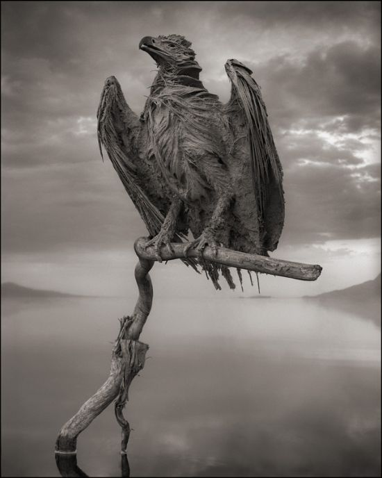 Amazing and Deadly Lake Natron in Tanzania