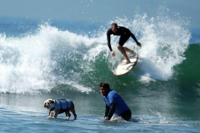 Dog Surfing