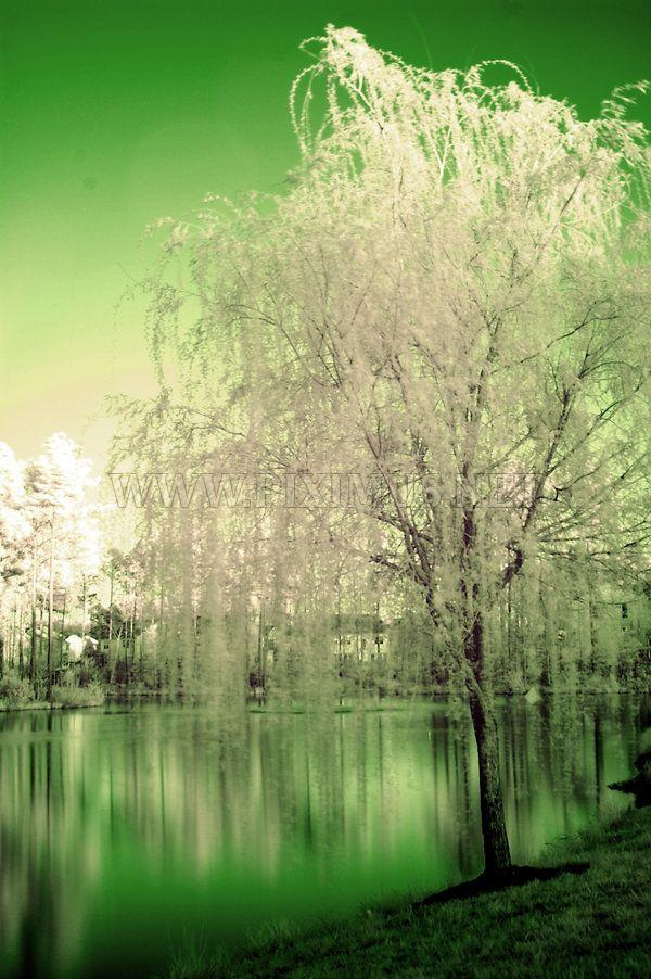 Beautiful Infrared Landscapes
