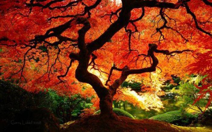 Beautiful Fall, part 2