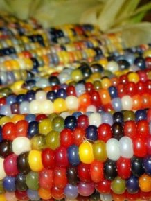 Colored Corn