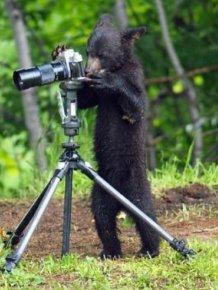 Very Creative Photos of a Bear Family