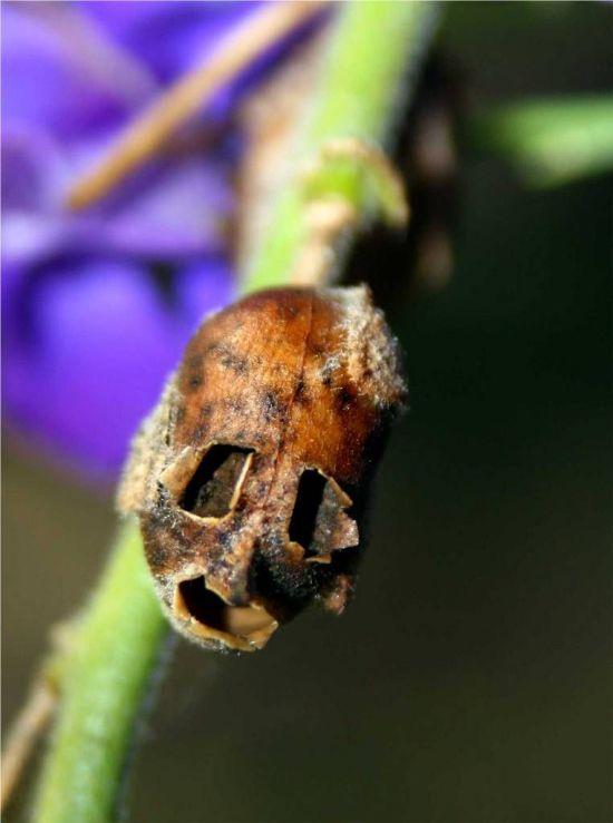 Evil Flowers
