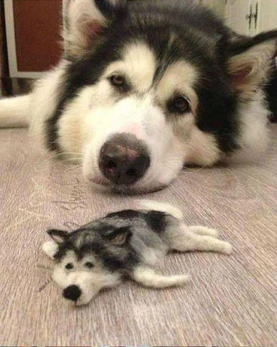 Husky Doll