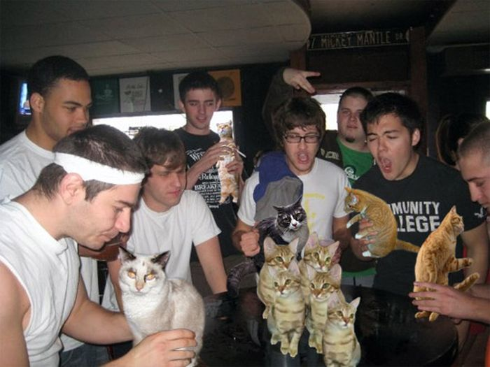 Booze Cats