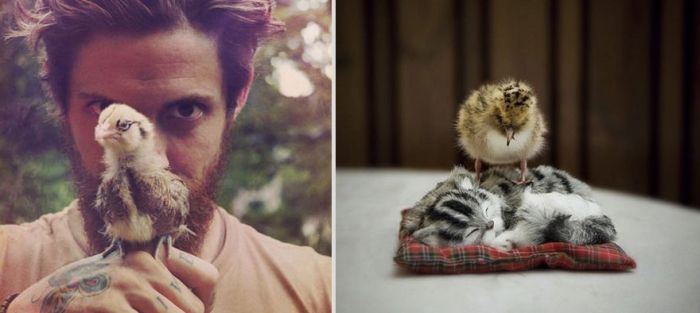 Hot Men And Their Feline Counterparts, part 2