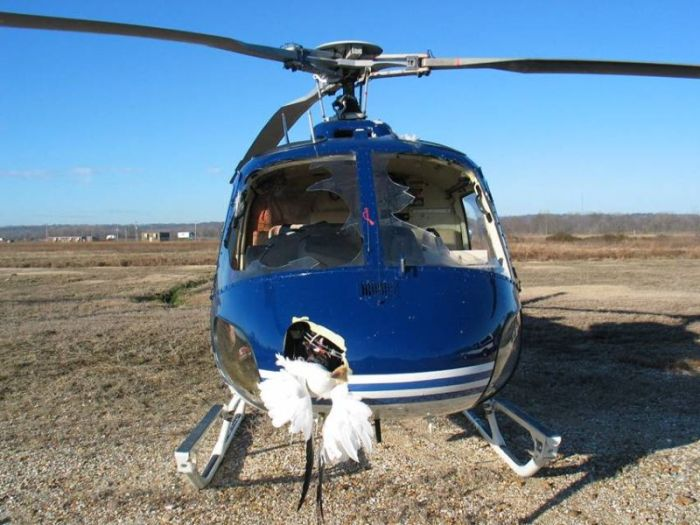 Helicopter vs Birds