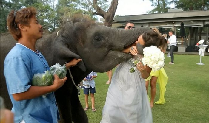 Elephant Kissed the Bride