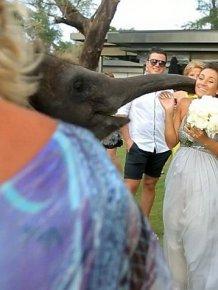 Elephant Kissed the Bride