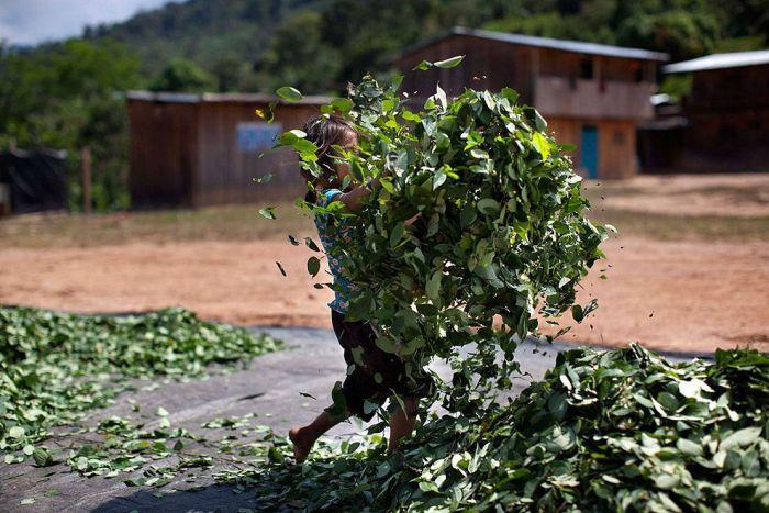 Coca Farmers in Peru