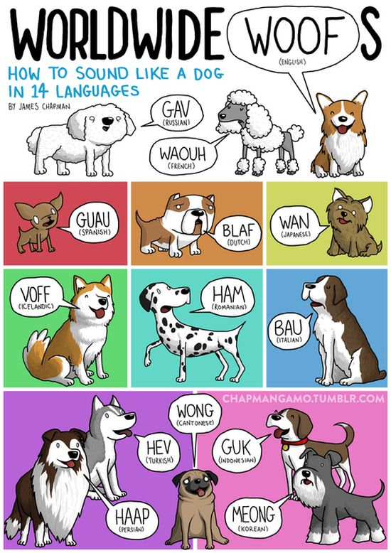 What Noises Animals Make In Other Languages