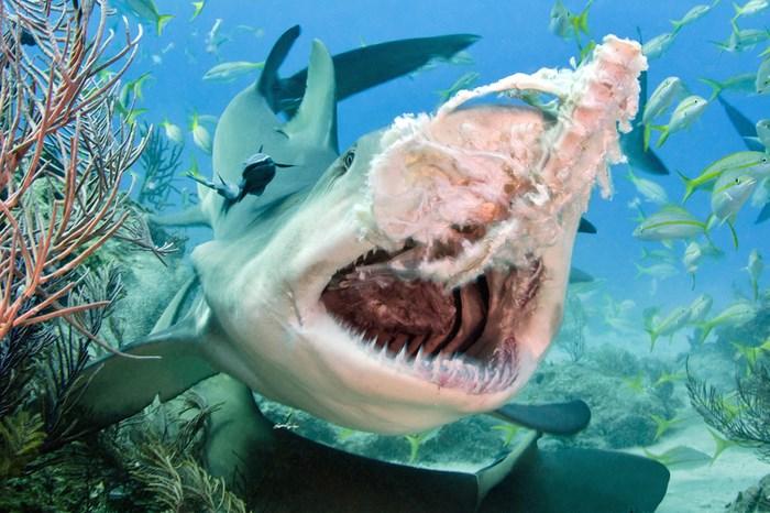 Great Underwater Photos