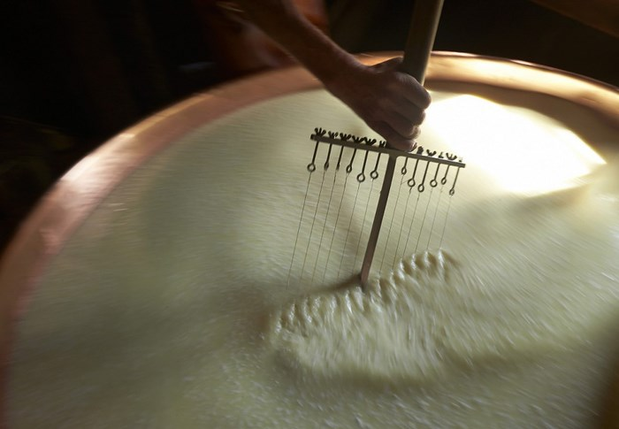The Making of the Real Swiss Cheese