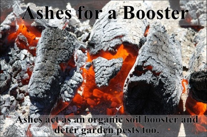 Lifehacks for Your Garden