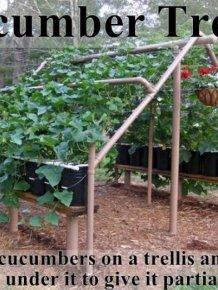 Lifehacks for Your Garden