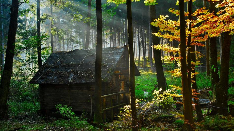 Most beautiful houses in the forest