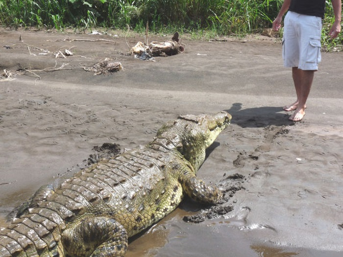 This Guy Is Not Afraid of Crocodiles