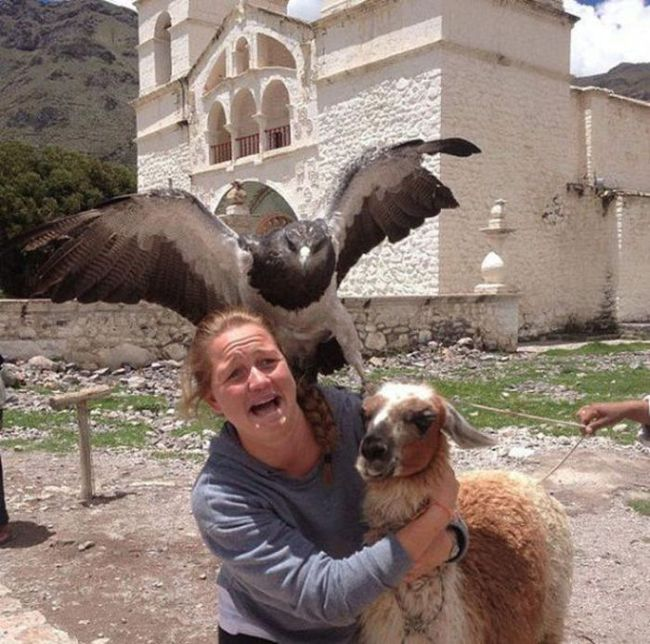 Funny Animal Photobombs