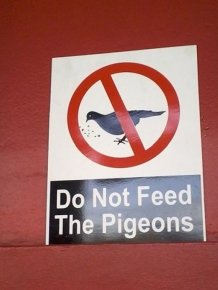 Don't Feed Pigeons