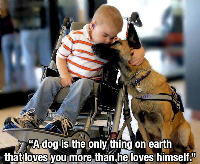 This Post Is for All Dog Lovers