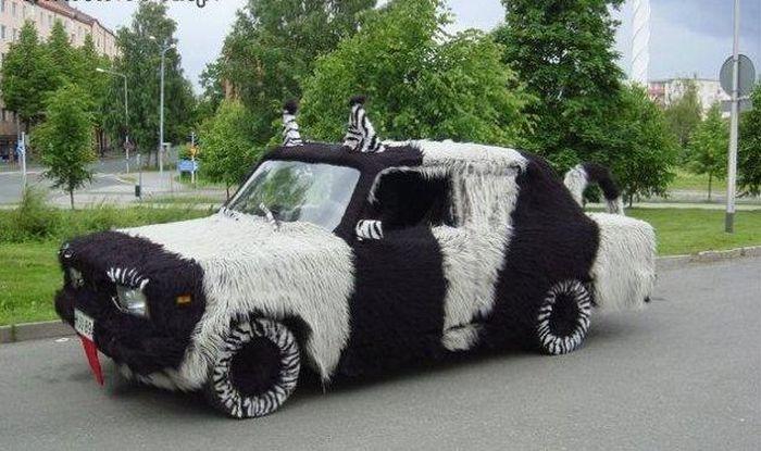 crazy zebra фото