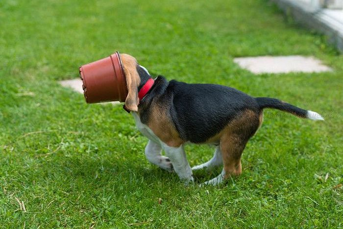 Dog vs Flower Pot