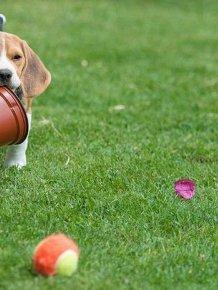 Dog vs Flower Pot