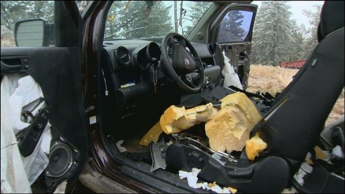 Bears vs Car