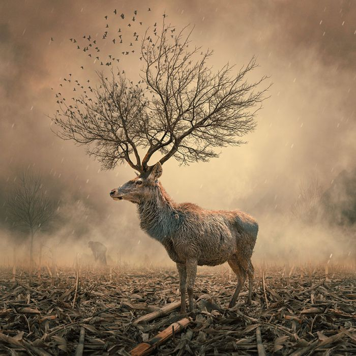 Amazing Photo Manipulations by Caras Ionut