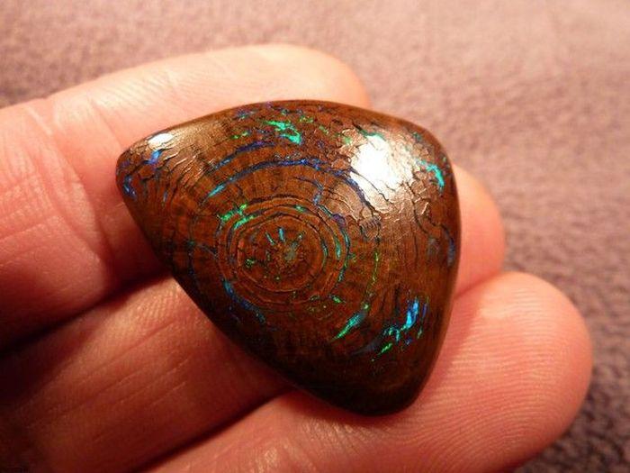 Opalized Wood Boulder Opal