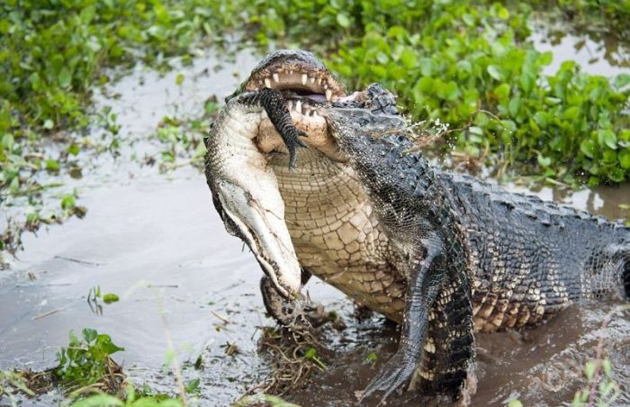 Alligator Baby Room