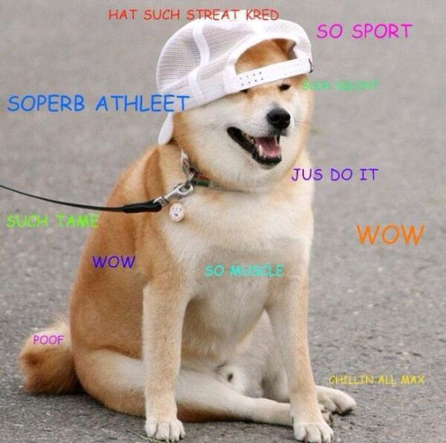 The Best Of: Doge