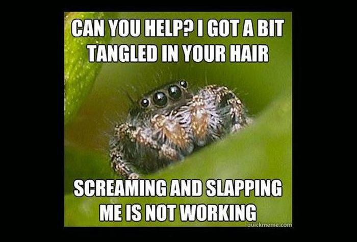 Misunderstood Spider Meme