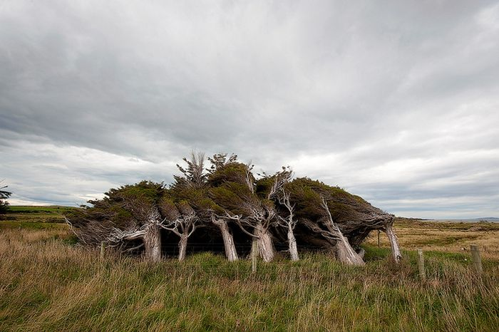 Trees Shaped into Beautiful Form by Winds
