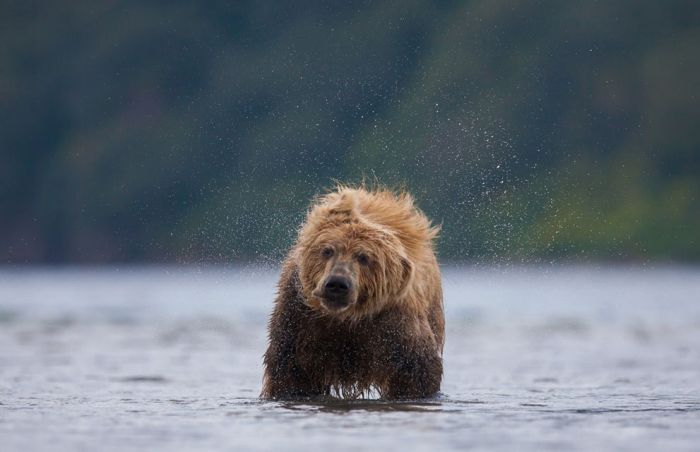National Geographic Photo Contest 2013, part 2013