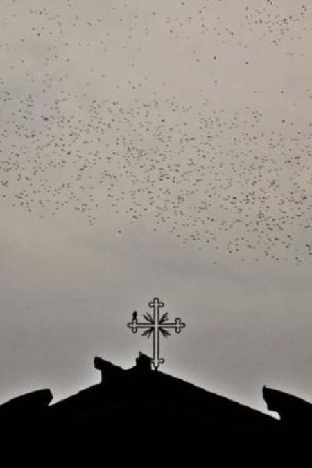Starlings Occupy Rome