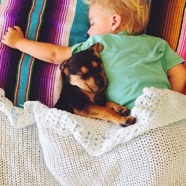 A Toddler and a Puppy Take a Nap