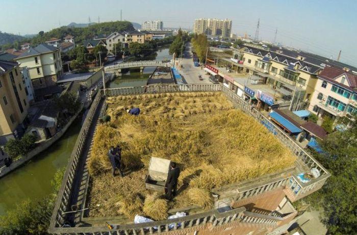 Roof as Farmland